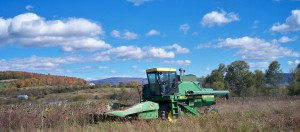 State Line Biofuel Farm in Shaftsbury, VT and Ekolott Farm in Newbury, VT are growing a combined 30 acres of sunflowers for Green Mountain Power. Photo courtesy of Vermont Sustainable Jobs Fund.