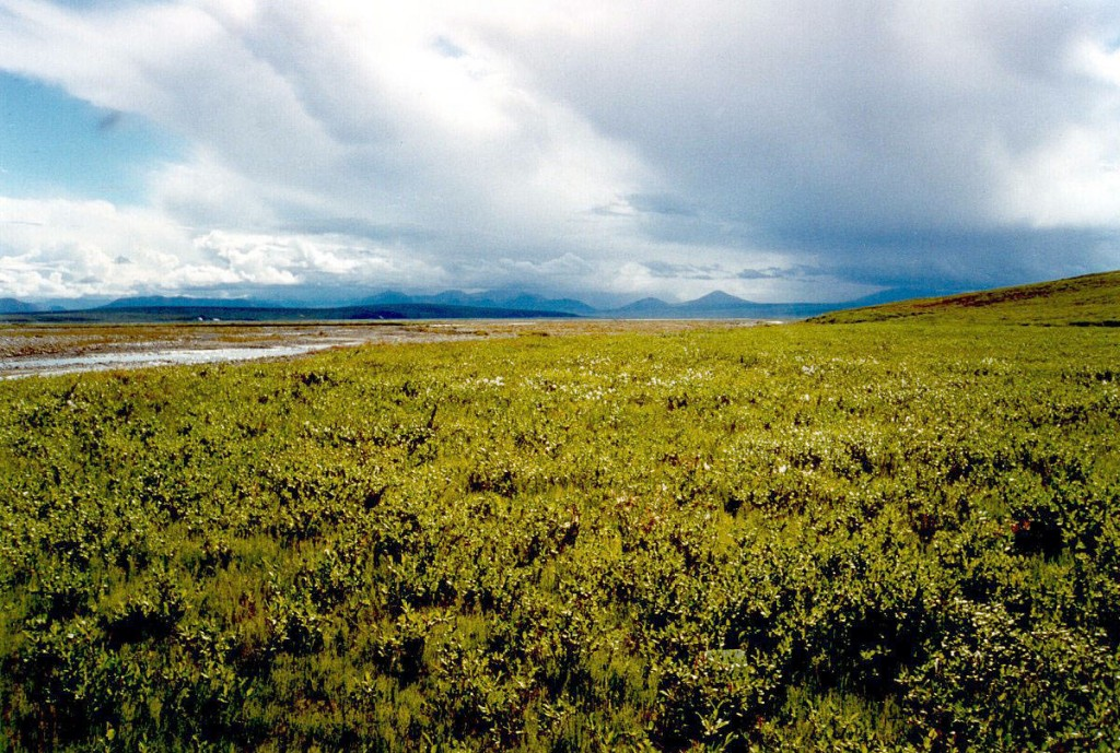 Arctic tundra is already changing from a warming climate, causing methane emissions to rise, speeding more climate change. U. S. Fish and Wildlife photo.
