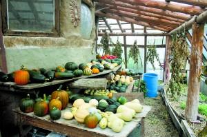 Harvest at D Acres