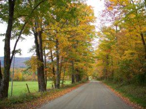 Vermont sugar maple. Photo: littlestirrings.wordpress.com