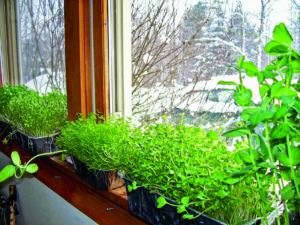 A farm on a window sill. Photos: Chelsea Green Publishing.
