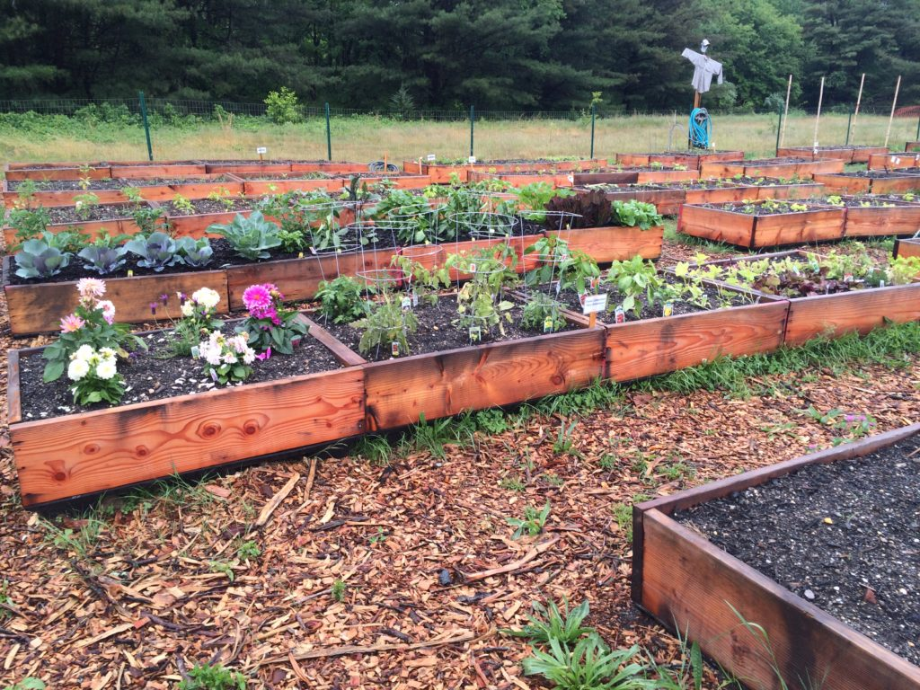 BAE Systems' Electronic Systems employee garden in Greenlawn, New York incorporates 150 raised bed boxes for employees to grow flowers, plants, and vegetables. Courtesy of BAE Systems' Electronic Systems.