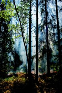 'Smoke and sunlight in forest' is the picture shown on p. vi in Drawdown. Photo coutesy of Penguin Books.