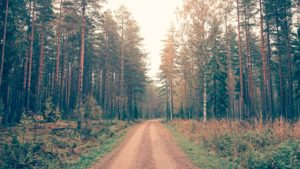 Road through a managed forest. Public domain