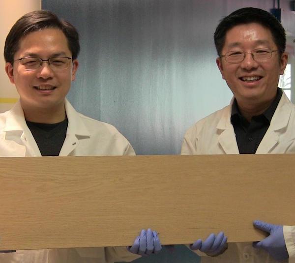 Liangbing Hu and Teng Li (Image: University of Maryland)