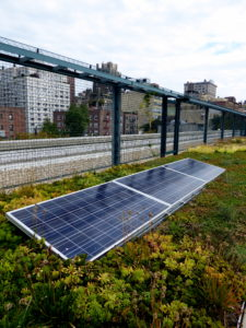 Green roof on PS 41 in Greenwich Village. Photo by Aloha Jon, Wikimedia Commons.