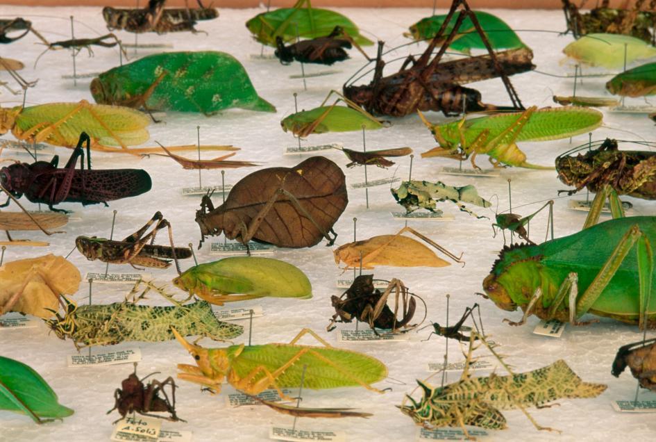 Specimens (Frans Lanting, National Geographic Creative)