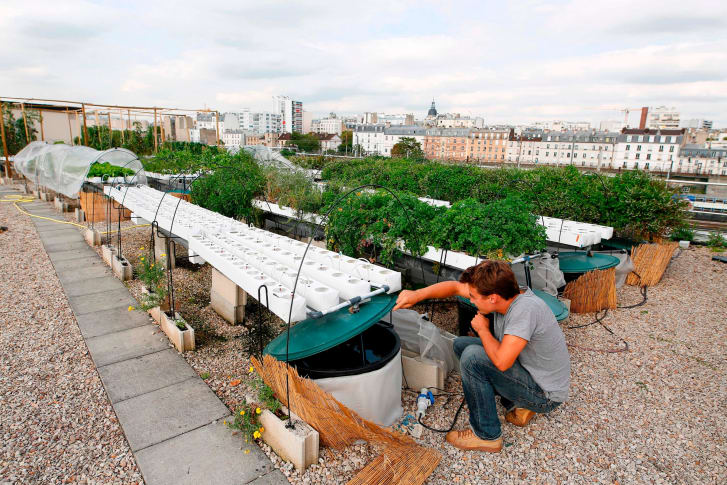 Hydroponic system on a rooftop