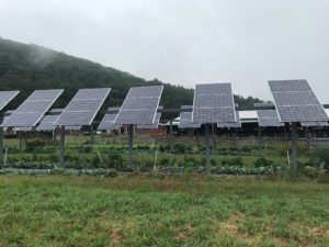 A 16.8kW dual-use array completed in 2009 at UMass Amherst Stockbridge School of Agriculture in South Deerfield, MA. The crops directly underneath the solar panels produced yields comparable to crops in direct sunlight. These crops include tomatoes, beans, and lettuce, among others. Courtesy James Marley, Hyperion Systems, Fall 2017.